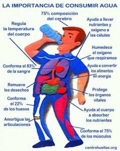 Importancia beber agua