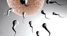 Infertilidad y acupuntura4