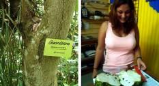 Guanábana Anticancerígeno Natural